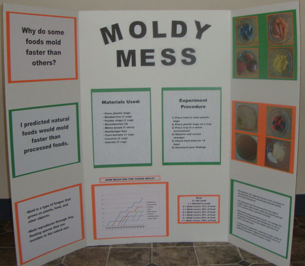 Mold on food science project